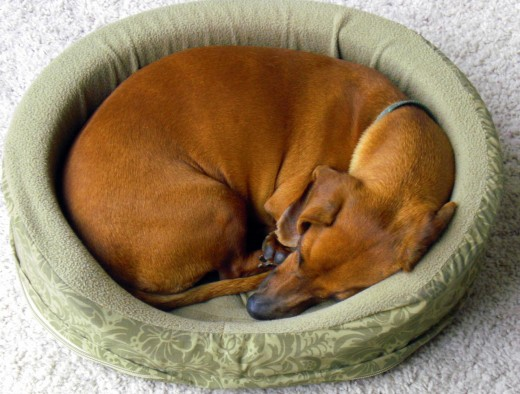 Put your pooch in a dog bed to help ease pressure sores and even prevent calluses from getting  worse