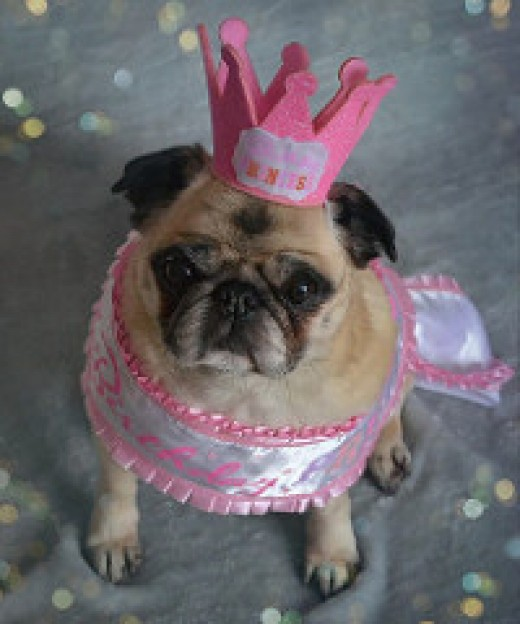 Princess pug cheers you on, we're almost done! :D