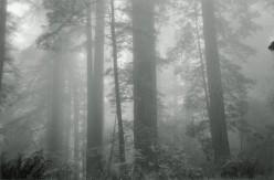 Misty Home