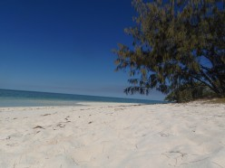 Heron Island: Finding Peace in Nature With a Digital Detox