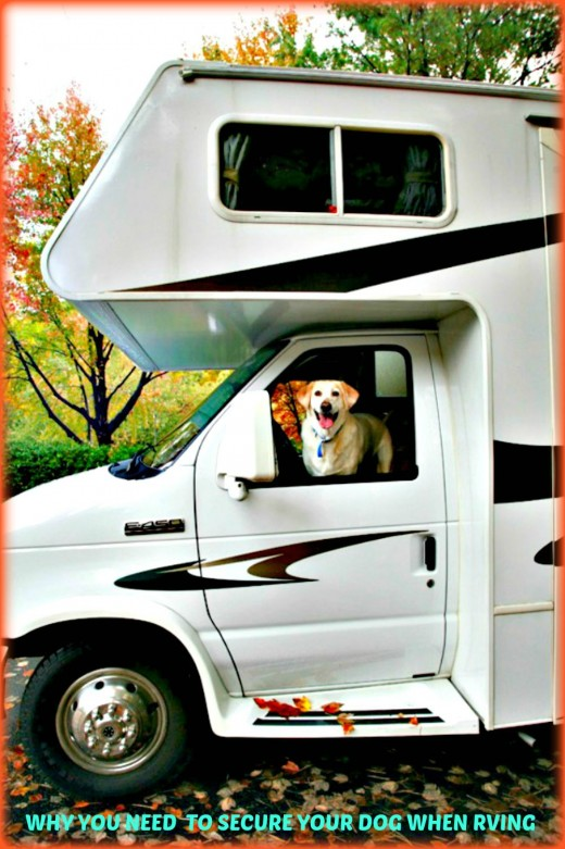 Keep your dog and your family safe on RV trips by following the new laws and using appropriate restraints.