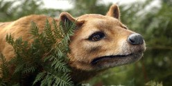 The Tasmanian Tiger that saved Joe's life