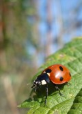 Biological Methods of  Pest Control for Your Organic Garden