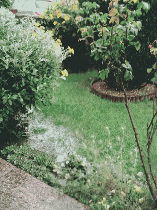 Rain soaked gardens