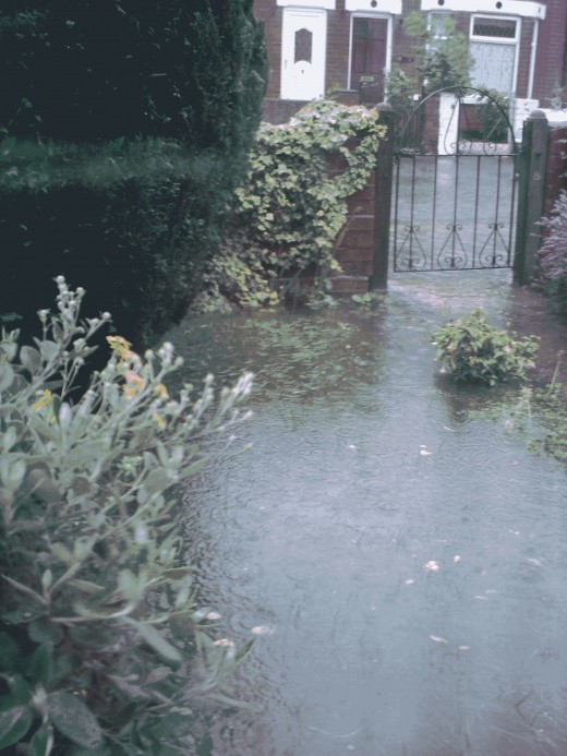 Sodden grass, plants and flowers
