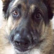 Cals profile image