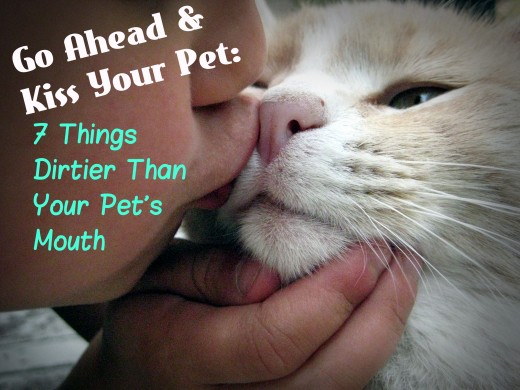 Kiss your kitty cat!  It involves fewer germs than you're probably already getting in your kitchen, at the mall, or by handling that cell phone you take with you into the bathroom.