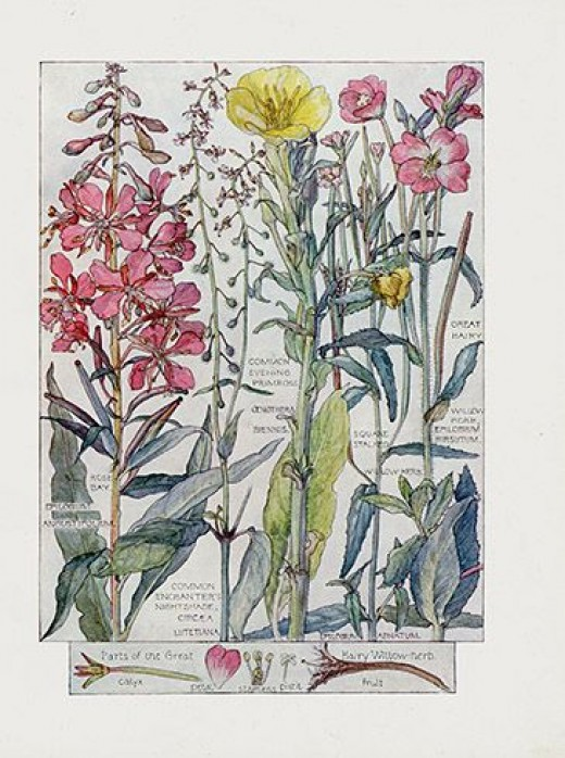 Botanical prints are all over the internet.