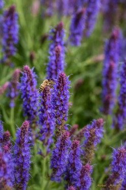 How to Grow Low-Maintenance, Great-Smelling Lavender