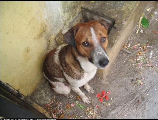 Cute, Sad Dog