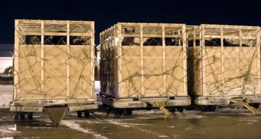 Horses being shipped alive to Japan