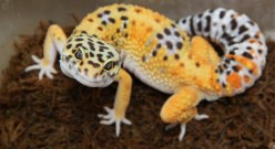 The Top 8 Best Exotic Pets to Keep