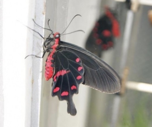 A butterfly that had just emerged