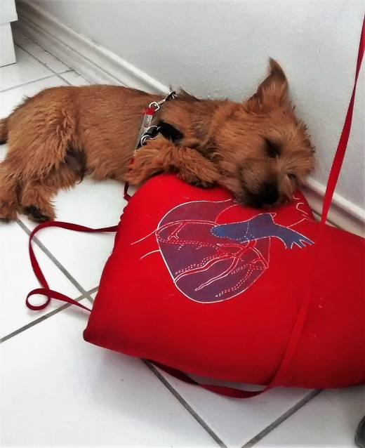 Chipper's thoughts: Honey bought me a heart shaped pillow that is red on which to rest my weary head. See the smile on my face? What more can be said?