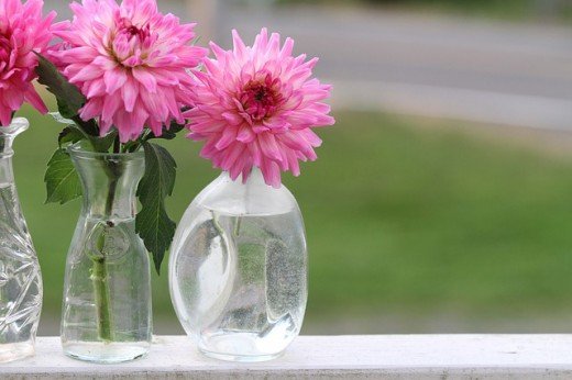 A single dahlia as a cut flower can grace any vase or a simple bottle.
