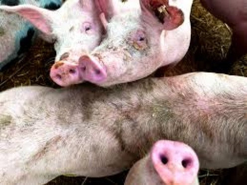 China is the number one supplier of pork products in the whole world.
