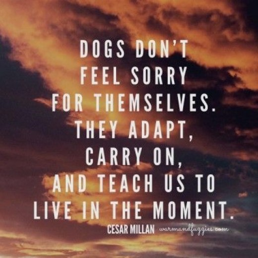 A great quote about dogs