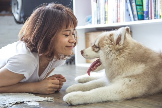 Pet owners love their animals like their children, which leads to a lucrative business opportunity for those willing to take a chance. There are many options for animal lovers, from pet grooming to doggie date planning.