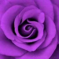 anncarcat profile image