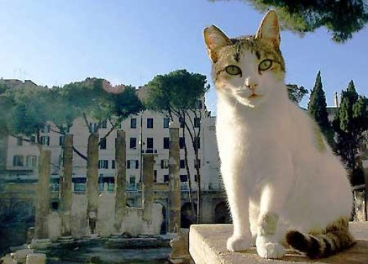 Cat sits amongst the ruins.
