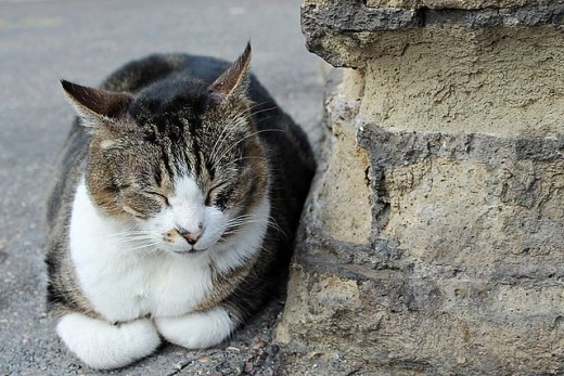sleeping cat next to a Roman wall