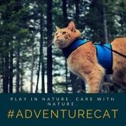 wilderness-cat profile image