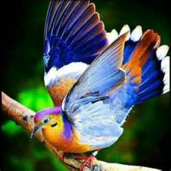 Songbird's Sweet Freedom! (Dedicated to Joshua)
