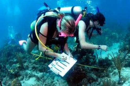 This is a picture of some Marine Biologist in action.