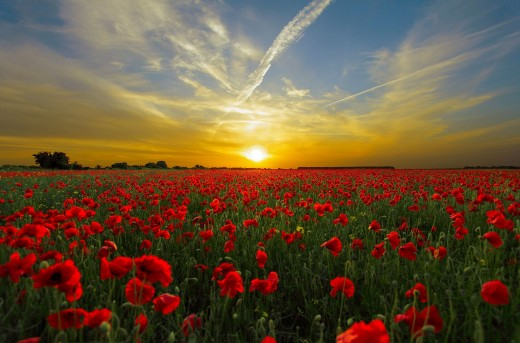 In the Calm of the Dusk Soul Is Humming in Chorus Its Lullaby with Every Sleepy Head of Those Flowers