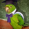 TalkingParrot22 profile image