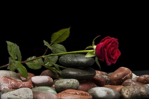 Red Rose, Symbol of Love