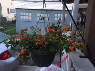 Hummingbird hanging planter that I've seen the hummingbird coming to it