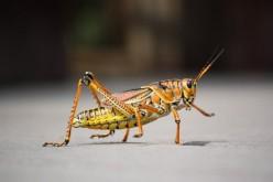 Grasshopper Hotel