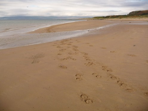 Blackwaterfoot: horseshoe prints on the beach.