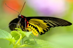 7 Creative Ways to Make a Thriving Butterfly Garden
