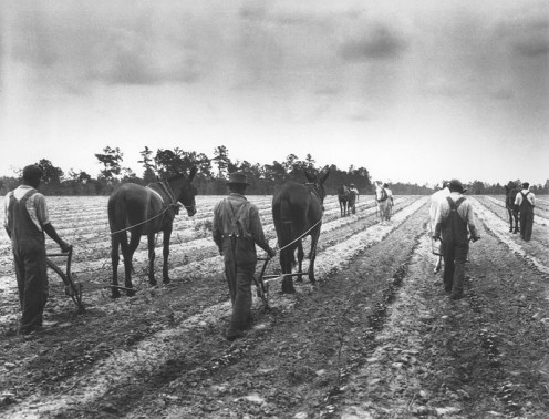 Cultivating cotton demonstration in Eastover, South Carolina, USA on May 17, 1932.