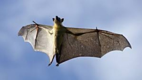 When a bat like this starts coming you need to take cover to avoid it.