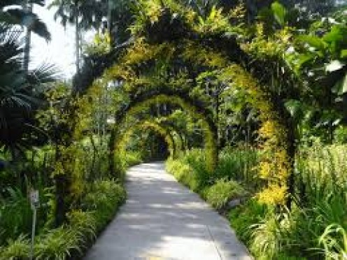 Botanical Gardens in Singapore is a long and wide path of greenery and lovely flowers and plants throughout.