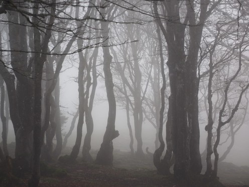 Mistaken Hauntings: Is It a Ghost or a Fairy?