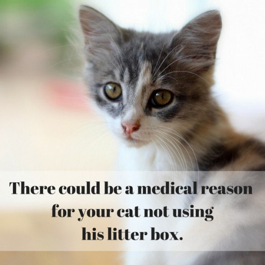 A veterinarian can make sure there's not a medical issue that's causing your cat not to use the litter box.