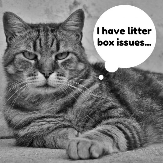 There are many litter box issues that can cause a cat to not use his or her box.