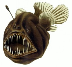 Top 6 Interesting & Unusual Deep Sea Fish