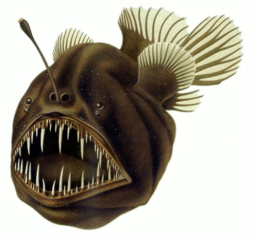The Humpback Anglerfish