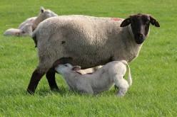 Why Dads Should Encourage Breastfeeding!