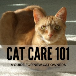 Cat Care 101 - a Guide for New Cat Owners