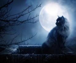 Cats (a poem)