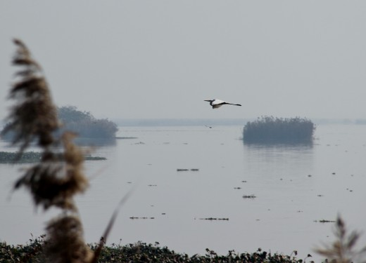 Harike Wetland and Bird Sanctuary
