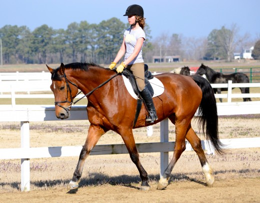 Leasing your horse can be beneficial for all parties involved.