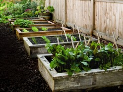Advantages of Raised Bed Gardening