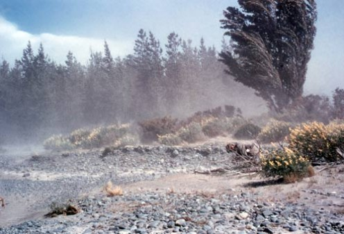 Wind blowing loess soil in New Zealand, making it difficult for plants to establish themselves there.